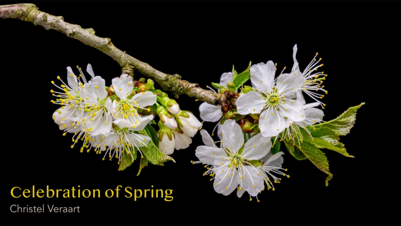 Celebration of Spring from the album Anthology by Christel Veraart